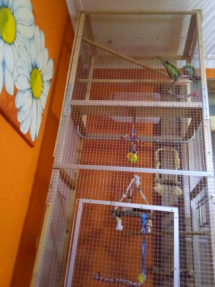 IKEA bird cage: New house for my parrots - IKEA Hackers