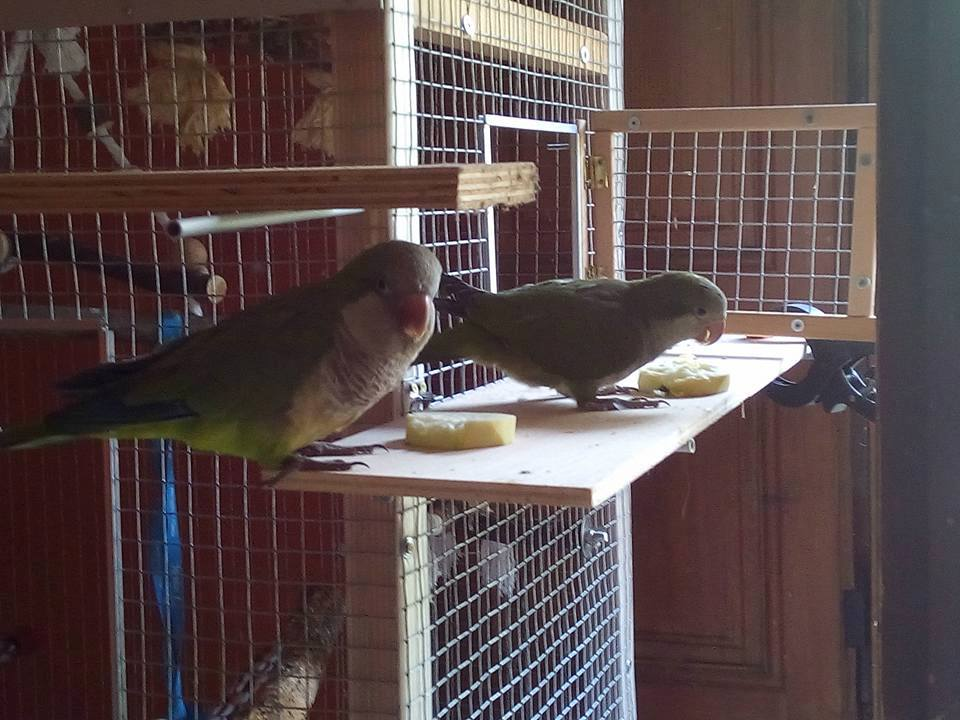 New house for my parrots - IKEA bird cage hackn