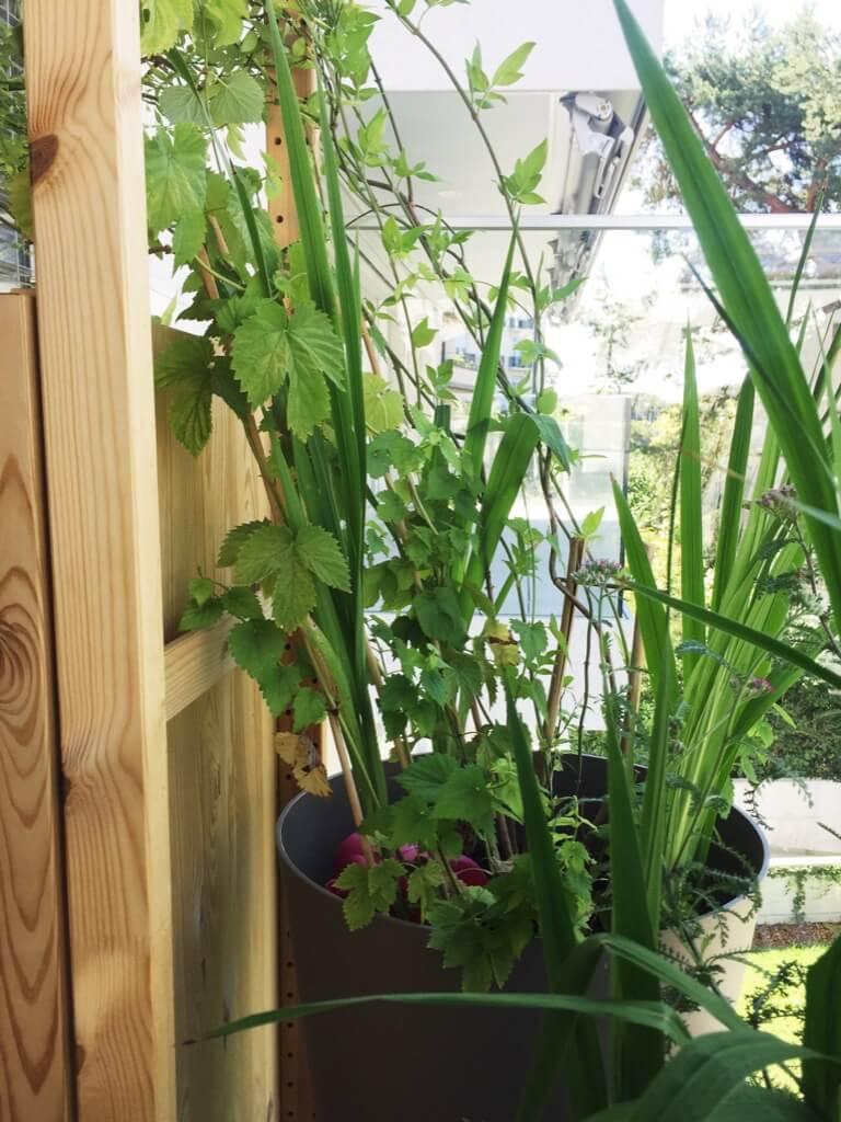 Here's an IKEA idea for balcony garden storage