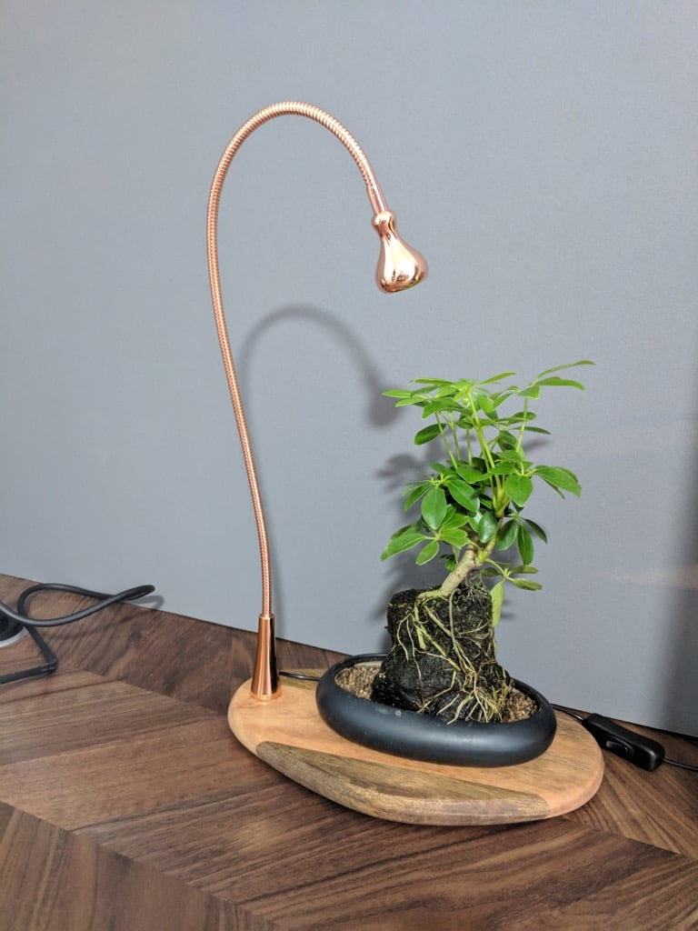 One Plant Tray / Display board with Light
