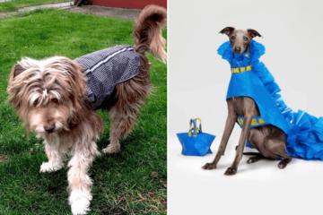 dog raincoat diy ikea