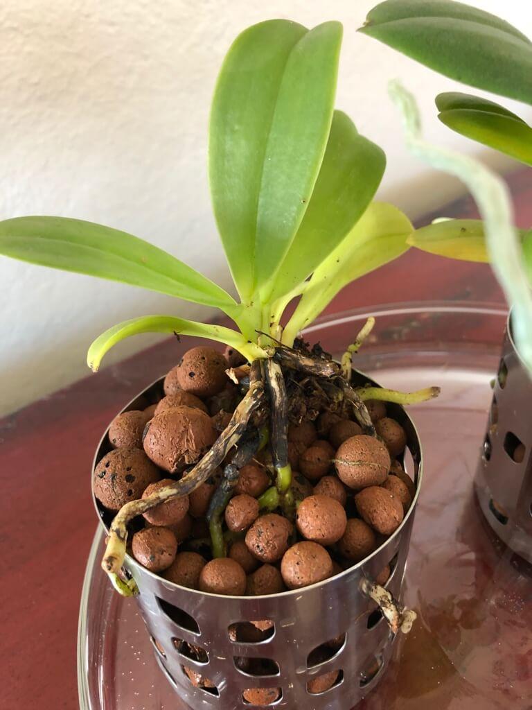 semi hydroponic orchid pot IKEA hack