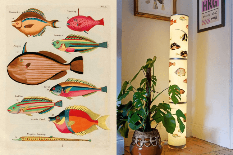 ikea vidja floor lamp with Louis Renard fish illustrations