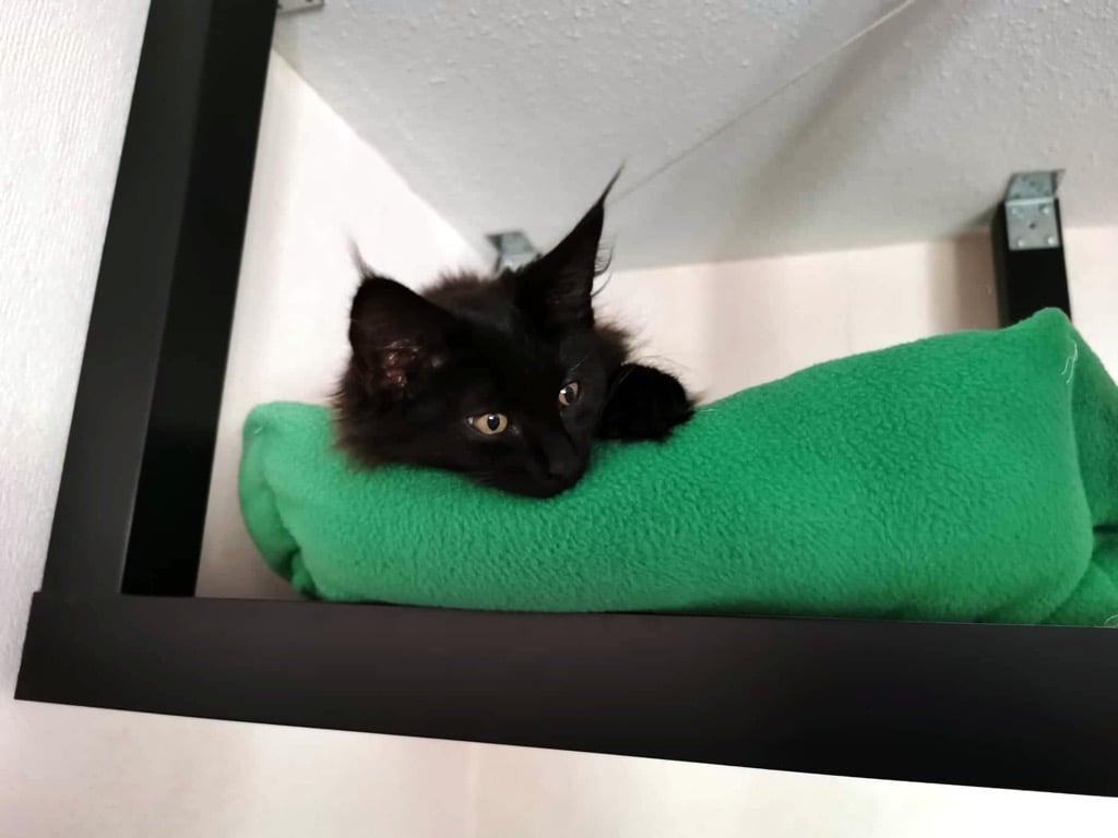 Кошачья дорожка IKEA LACK взломать