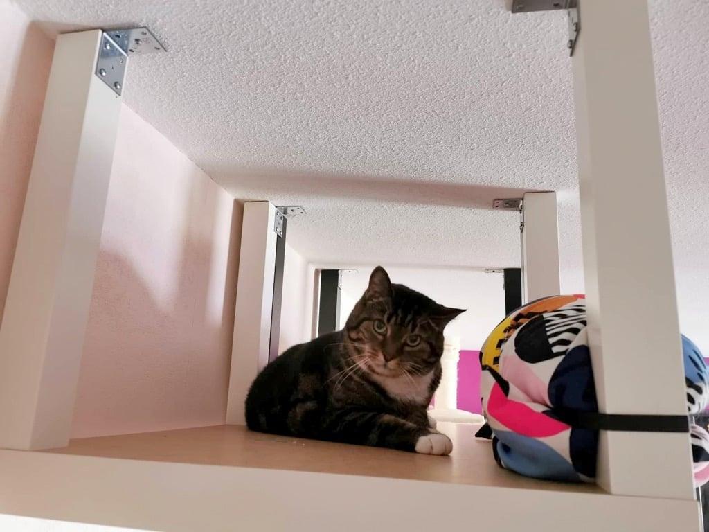 Cat walkway IKEA LACK hack