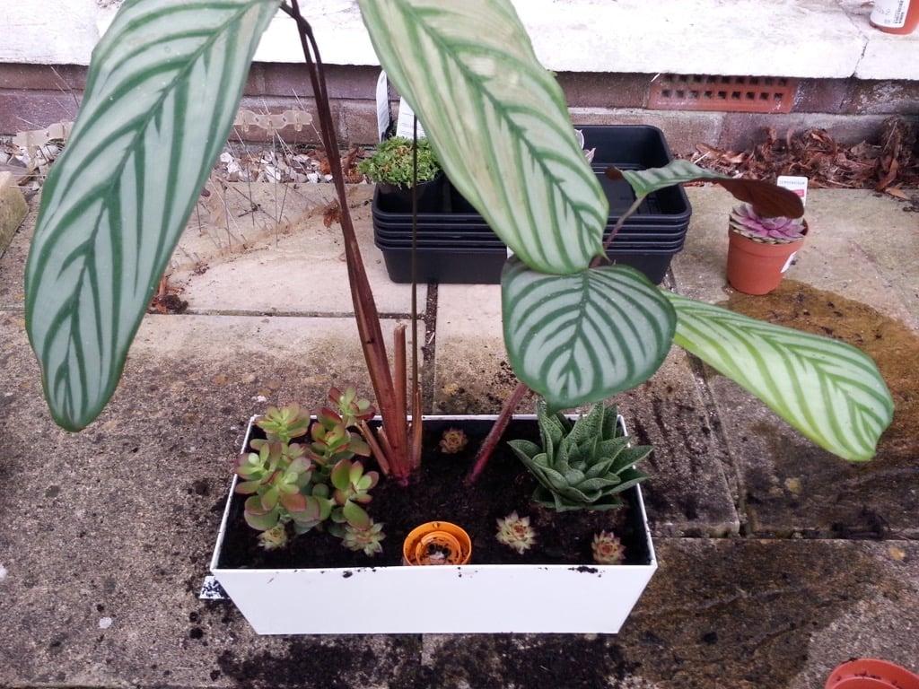 DIY self-watering planter - adding plants