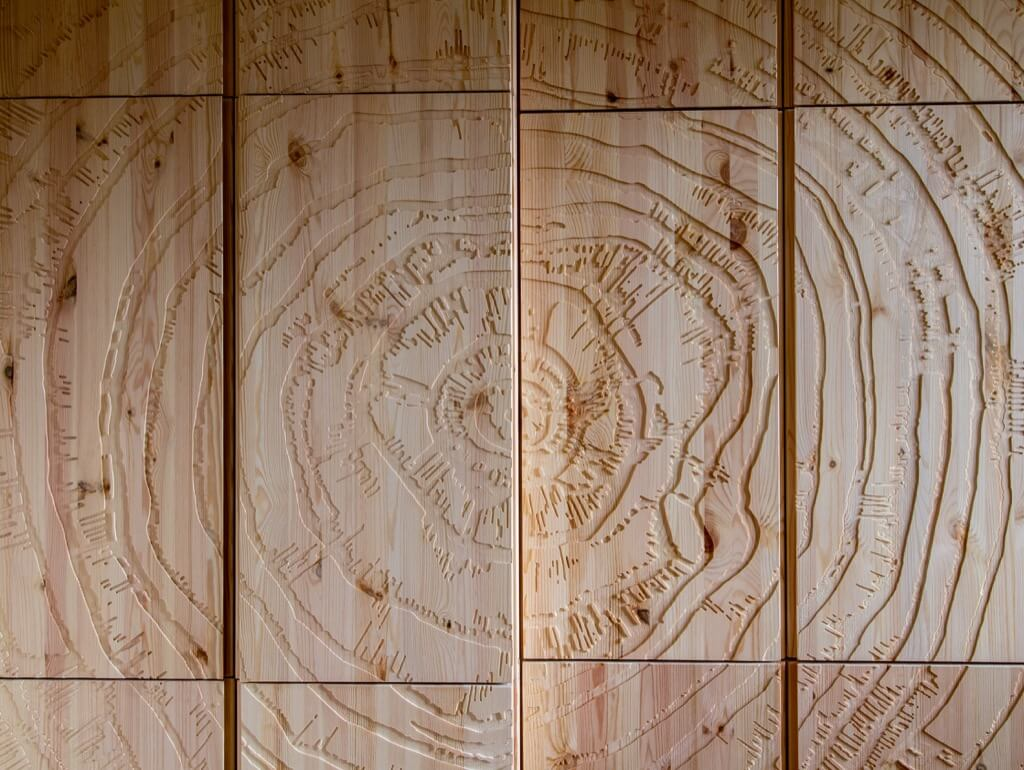 close up of tree ring