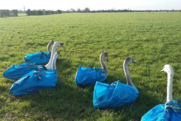 swan rescue bag