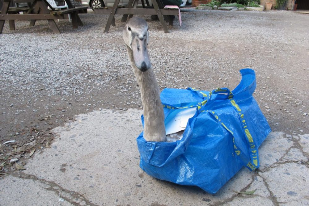 IKEA Swan Rescue Bag