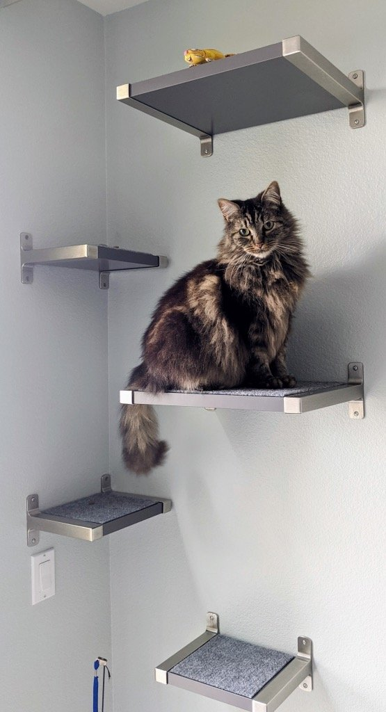Floating Cat Shelves with IKEA GRANHULT