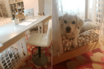 double dog crates desk