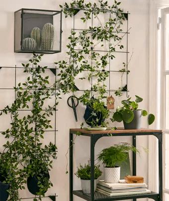indoor plant trellis hack