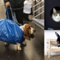 ikea hack for pets