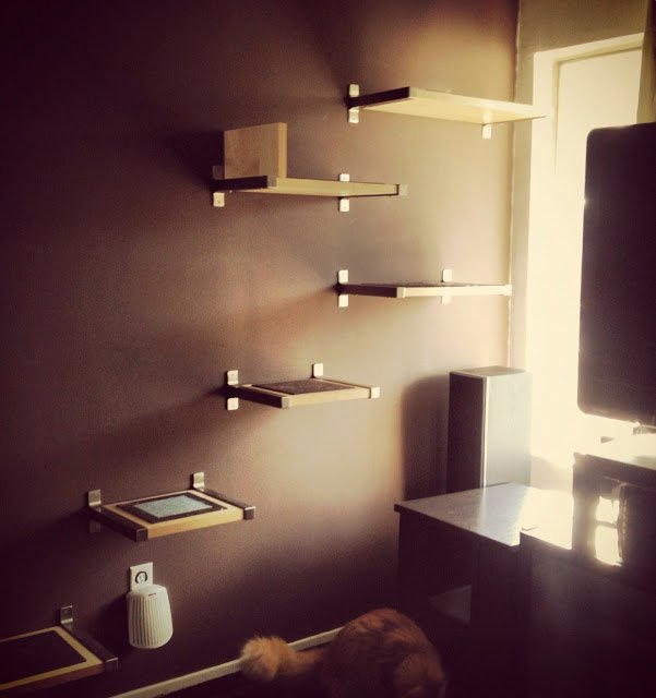 Fantastic Super Easy Diy Cat Shelves Pawpost Interior Design Ideas Tzicisoteloinfo