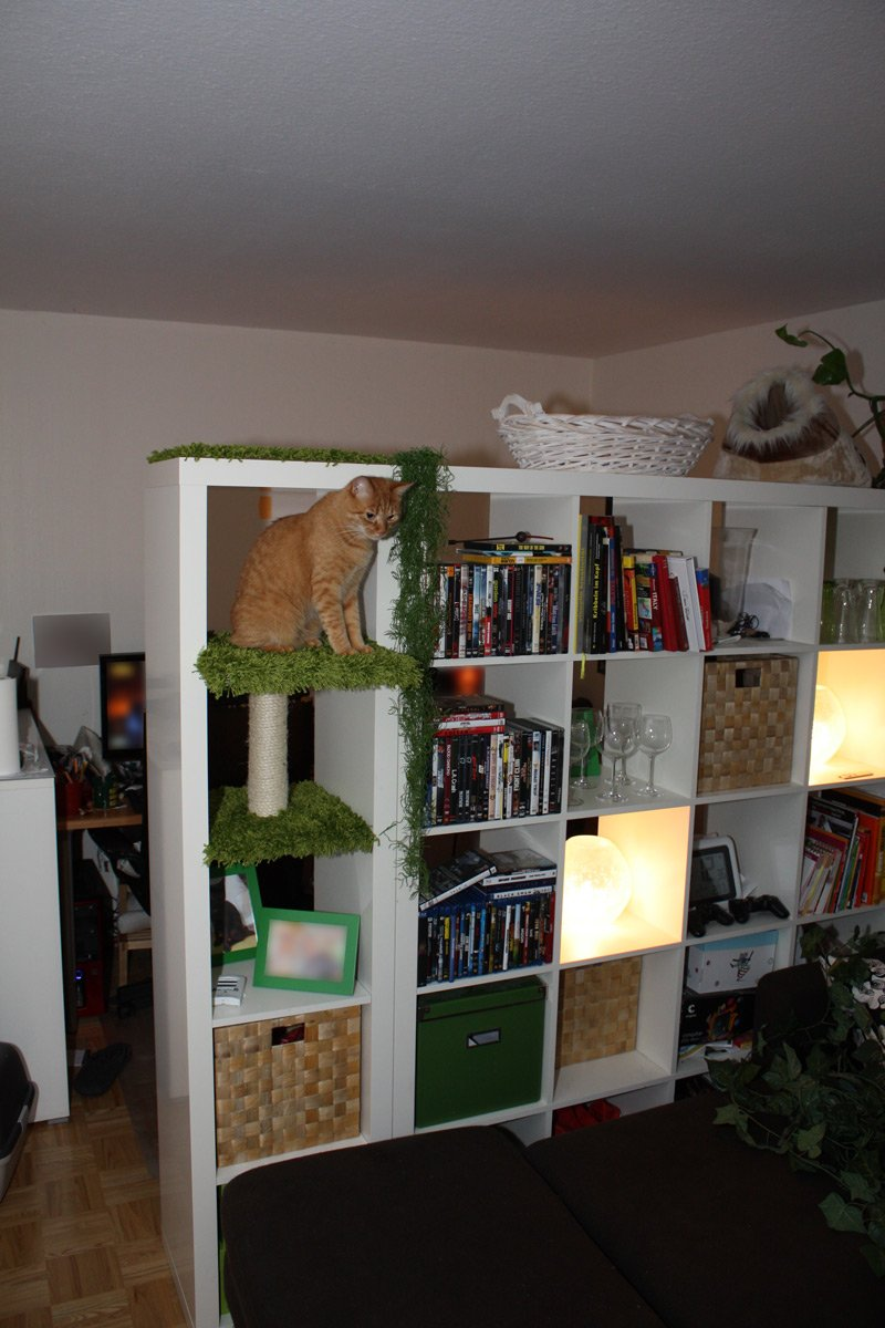 Room divider ikea expedit - Cat Expedition