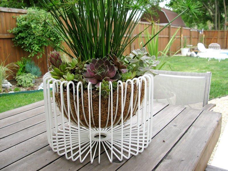 wire basket fruit bowl turned planter