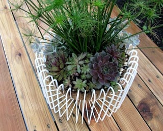 Ikea fruit bowl for succulents
