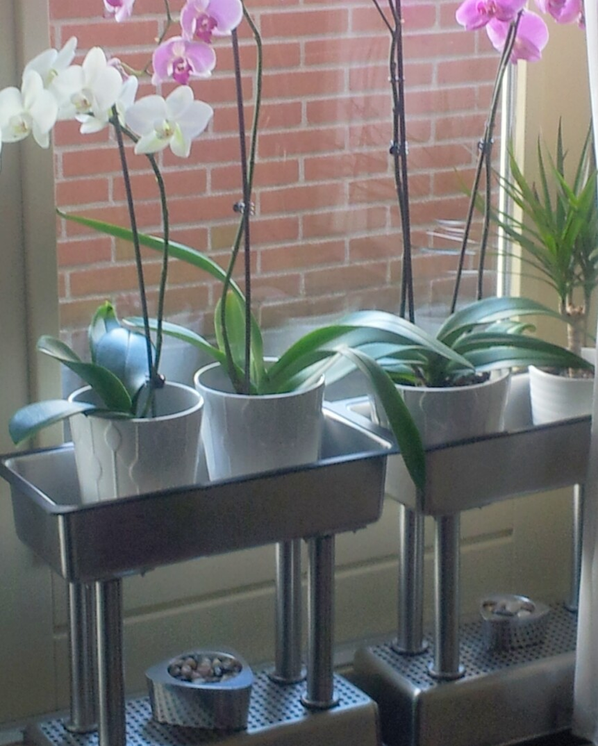Design Plant Stand