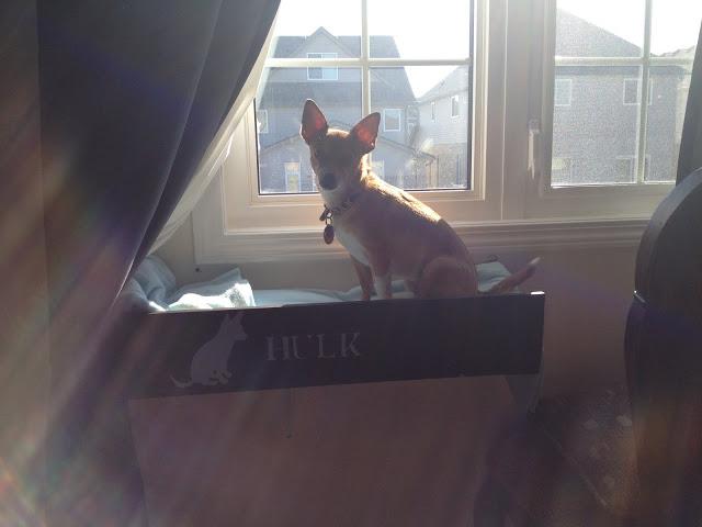 DIY dog window perch