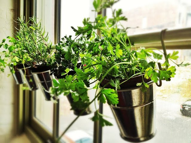 IKEA FINTORP Window Herb Garden | IKEA Hackers