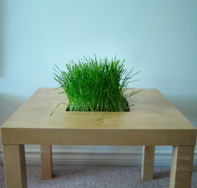 LACK Side Table Planter