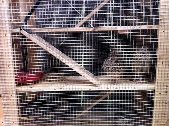 covey run quail condo