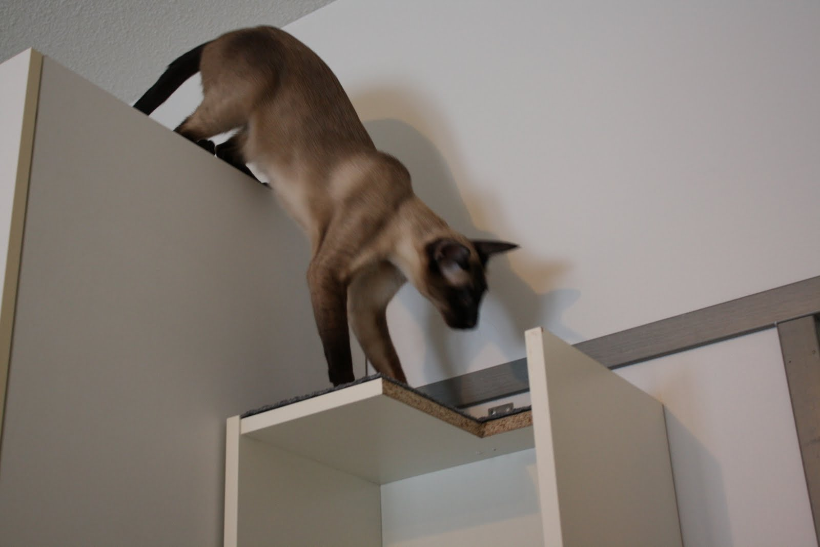 Cat climbing shelf in one compact Billy